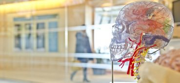 Photo of transparent skull